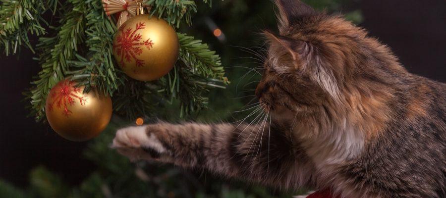 kat speelt met kerstbal