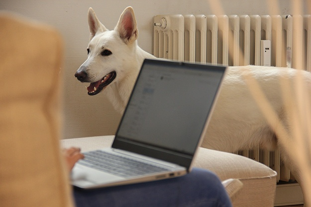 Hond Werk