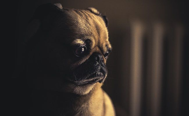 Hond Weetjes Donker