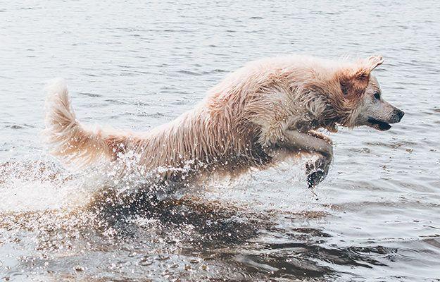 Hond Water Strand