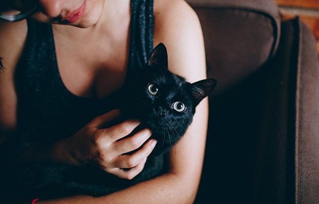 Kat Knuffelen